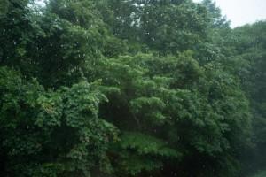 雨の菅平高原