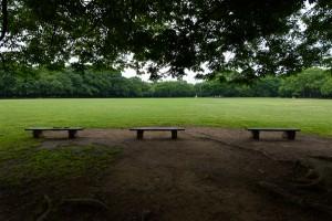 大泉緑地のベンチ