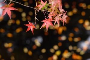 2015年秋の山崎