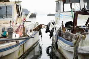 滋賀県沖島のねこ